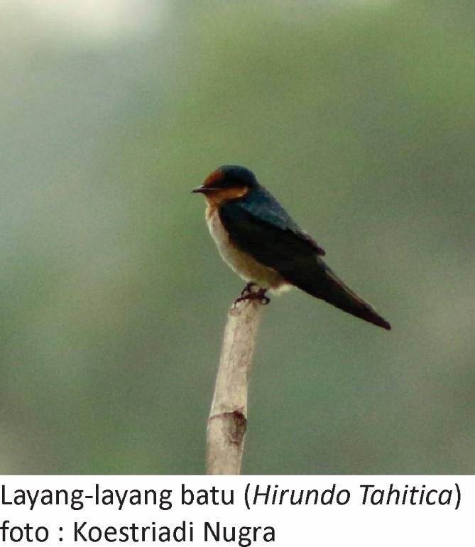 Layang Layang Batu Biodiversity